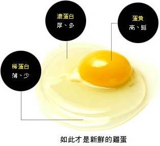 雞蛋常識-蛋黃挺立蛋白分明才新鮮